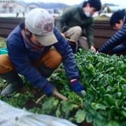 際コーポレーション、若手農業家と業務提携。無農薬の農産物の導入を開始。
