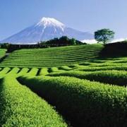 オズモール×静岡県。静岡のお茶の魅力を通じて和女子のたしなみを学ぶ「静岡茶女子会」ツアーを9月12日に実施。