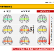 グレープフルーツが脳に与える影響について検証試験結果発表。ホットで飲むと脳が活性化。