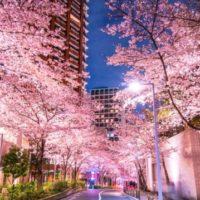 BLTステーキ、六本木で夜桜を満喫「桜まつり」の限定メニューが登場。